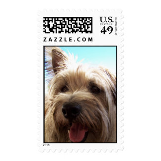 cairn terrier close up postage