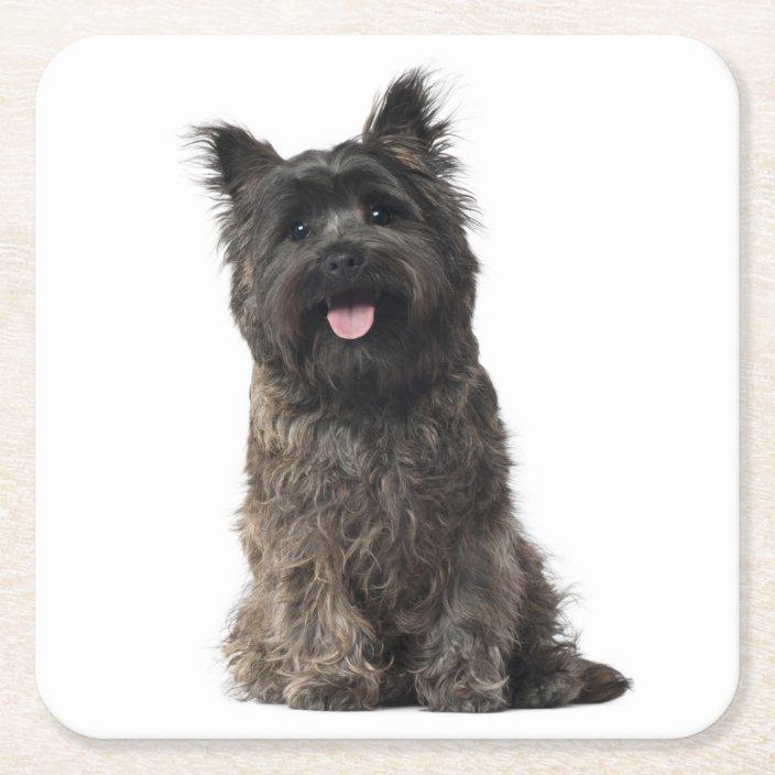 Cairn Terrier Gray Black Puppy Dog Love Square Paper Coaster Zazzle Com