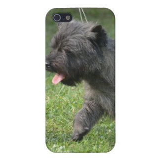 Cairn Terrier Case For iPhone 5/5S