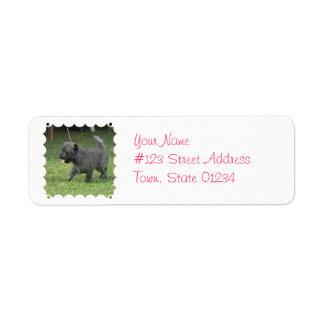 Cairn Terrier Labels