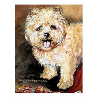 Cairn Terrier Portrait Postcard