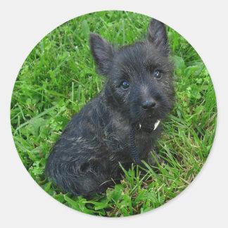 cairn terrier_puppy round sticker