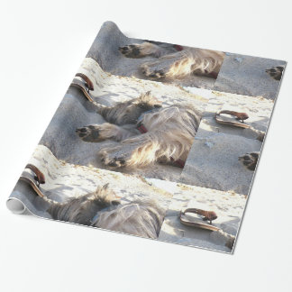 cairn terrier sleepin on beach.png wrapping paper