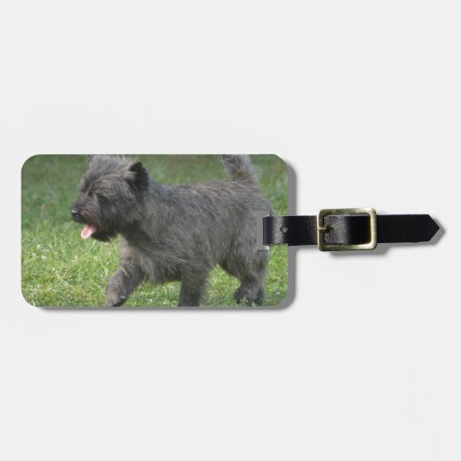 Cairn Terrier Tags For Luggage
