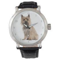 Cairn Terrier Watch
