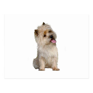 Cairn Terrier (Wheaten) - looking to the side Postcard