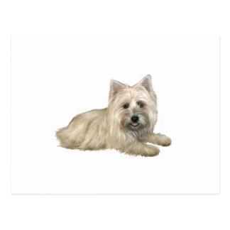 Cairn Terrier (Wheaten) - lying down Postcard