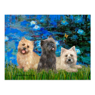 Cairn Terriers 4-13-21 - Lilies 3 Postcard