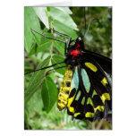 Cairns Birdwing Butterfly Notecard Card