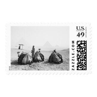 Cairo Egypt, Camel Jockeys Giza Pyramids (NR) Postage