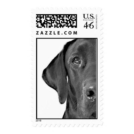 Cairo Half-Dog Stamp
