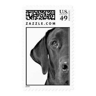 Cairo Half-Dog Stamps