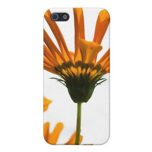 Caja amarilla de la mota de las margaritas iPhone 5 carcasas