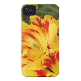 Caja amarilla y roja bonita del iphone del tulipán Case-Mate iPhone 4 carcasas