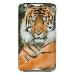 Caja anaranjada de iTouch del tigre Barely There iPod Cobertura