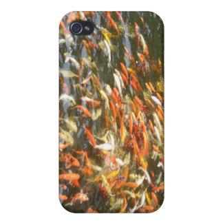 Caja anaranjada del iPhone 4 de Coi Koi de los pes iPhone 4 Carcasa