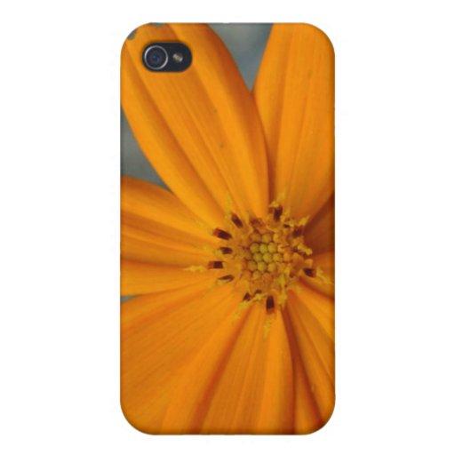 Caja anaranjada del iPhone del Wildflower iPhone 4 Cárcasas