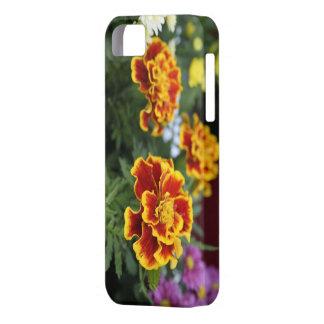 Caja anaranjada y amarilla de Iphone 5-5S de las m iPhone 5 Cárcasas