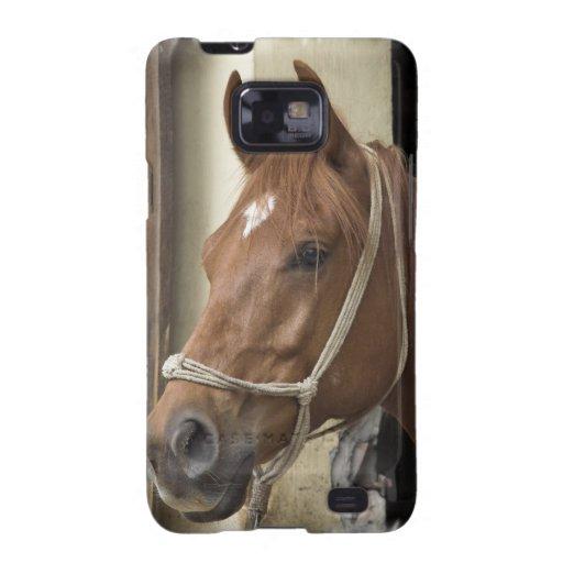 Caja árabe de la galaxia de Samsung de los caballo Samsung Galaxy SII Fundas
