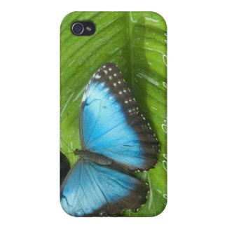 Caja azul del iPhone 4 de la mariposa de Morpho iPhone 4 Carcasa