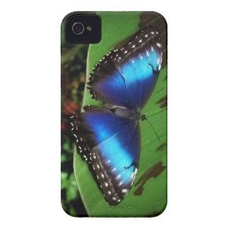 Caja azul del iPhone 4 de la mariposa iPhone 4 Protectores