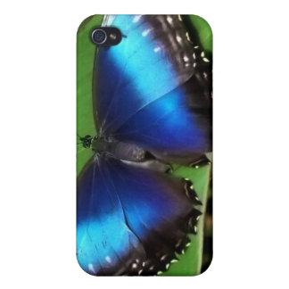 Caja azul del iPhone de la mariposa del ala iPhone 4 Cárcasa