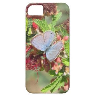 Caja azul marina del iPhone 5 de la mariposa iPhone 5 Fundas