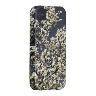 Caja blanca del iPhone 4/4s de las flores de cerez Vibe iPhone 4 Carcasa