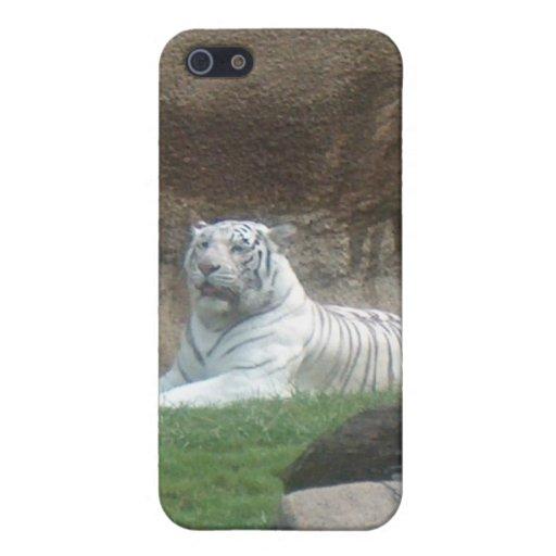 Caja blanca del iPhone 4 del tigre que toma el sol iPhone 5 Coberturas