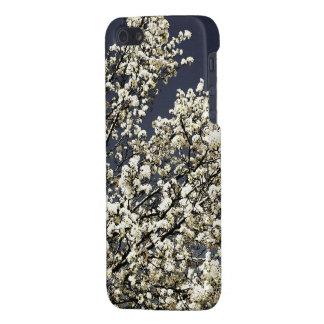 Caja blanca del iPhone 5/5s de las flores de cerez iPhone 5 Cárcasa