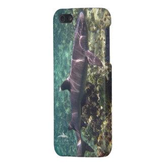 Caja blanca del iPhone 5 del tiburón del filón de iPhone 5 Cárcasas