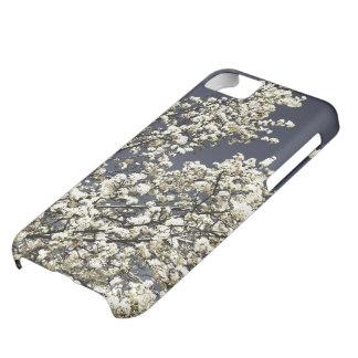 Caja blanca del iPhone 5c de las flores de cerezo