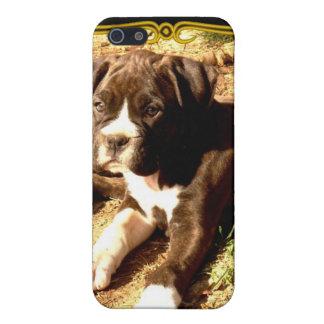 Caja Brindle de la mota del perrito del boxeador iPhone 5 Fundas