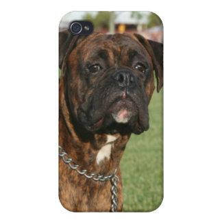 Caja Brindle de la mota del perro del boxeador iPhone 4 Fundas