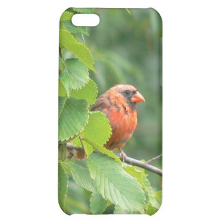 Caja cardinal del iPhone 4 del árbol del rojo anar