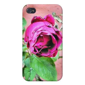 Caja color de rosa irlandesa salvaje del teléfono iPhone 4 funda