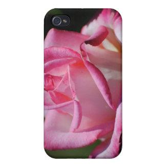 Caja color de rosa rosada de la mota de Kordes Per iPhone 4 Protectores