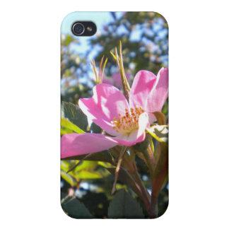 Caja color de rosa rosada del iPhone 4 iPhone 4 Fundas