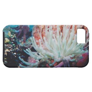 Caja colorida de la anémona de mar para el iPhone iPhone 5 Fundas