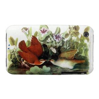 Caja colorida de la impresión de Audubon iPhone 3 Case-Mate Carcasa