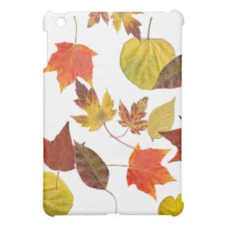 Caja colorida de las hojas de la caída