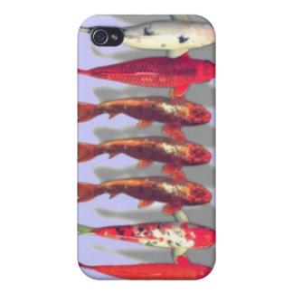Caja colorida del iphone de los pescados del koi iPhone 4 protectores