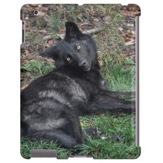 Caja de Blackberry de la foto de la fauna del retr