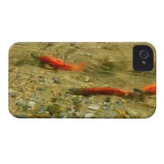 Caja de color salmón del iPhone 4 iPhone 4 Cobertura