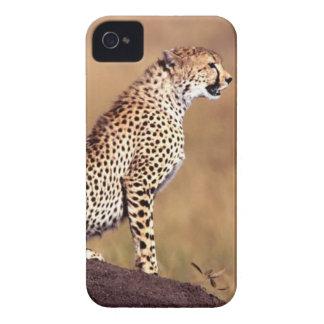 Caja de encargo de la casamata del guepardo de funda para iPhone 4