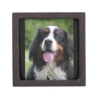 Caja de la baratija del joyero de perro de la mont cajas de regalo de calidad