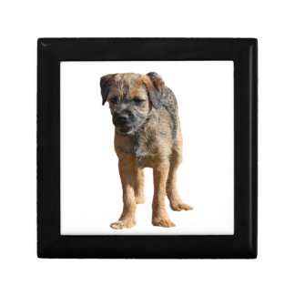 Caja de la baratija del joyero de perro de Terrier Cajas De Joyas