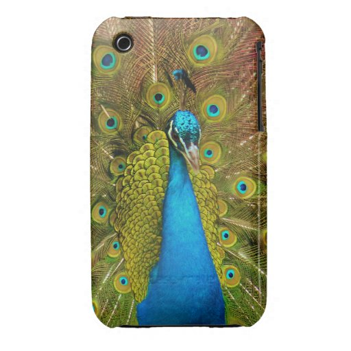 Caja de la casamata del pavo real iPhone 3 Case-Mate carcasa
