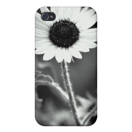 Caja de la flor 4G de Sun iPhone 4 Protectores
