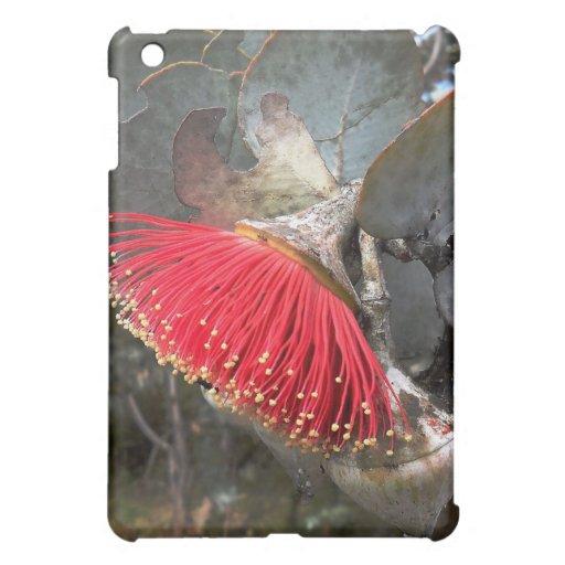 Caja de la flor del eucalipto